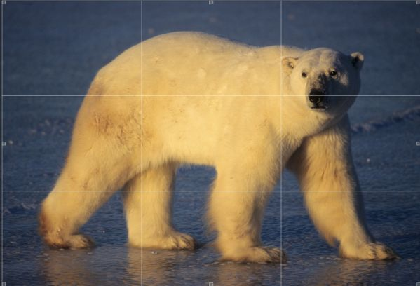 Screen Shot 2013 10 15 at 7.46.32 AM 600x408 Question from Bruce Faanes, Polar Bear Photo Tips